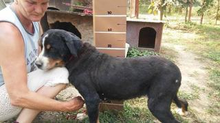 Zsazsa, Berner-Sennenhund-Mischlingshündin, geb. ca. Februar 2009 22934055rz