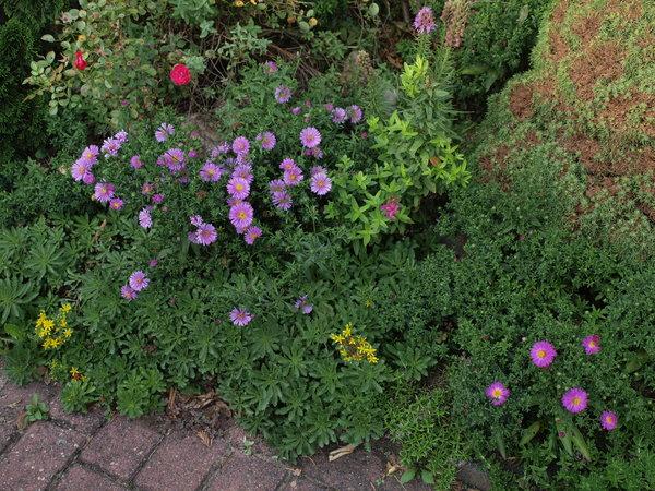 Eure Gartenbilder, Beete und Gestaltungsideen - Herbst 2015 - Mein ...