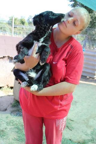 Panda, Mischlingshündin, geb. ca. April 2015 23127494zc