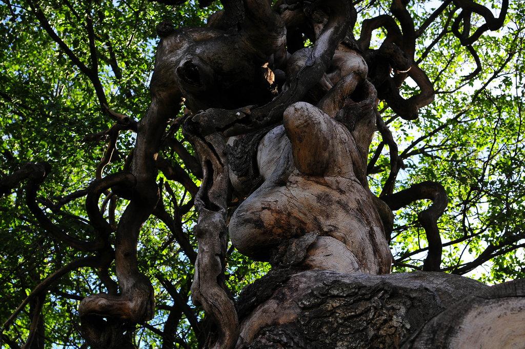 Was Ist Das Für Ein Baum skywarn austria forum thema anzeigen 22 09 2015 was ist das