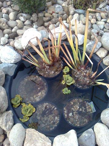 Pflege von teichpflanzen im winter for Miniteich winter
