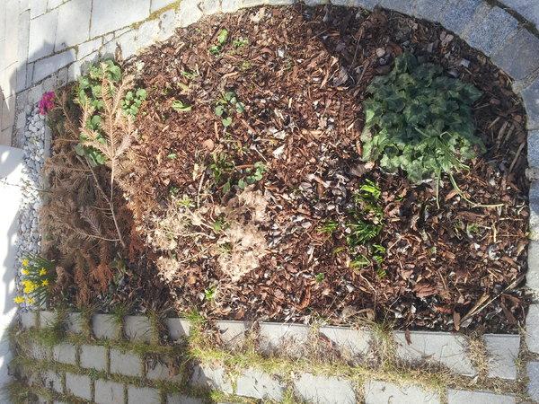 Viele ideen wenig zeit kraft seite 1 for Gartengestaltung ostseite