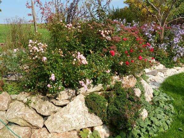 Eure Gartenbilder, Beete und Gestaltungsideen  Herbst