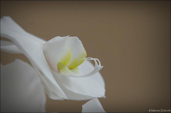 orchideen seite 1 foto treff mein sch ner garten online. Black Bedroom Furniture Sets. Home Design Ideas