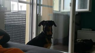 Kiwi hat ein neues Zuhause gefunden 23462178gf