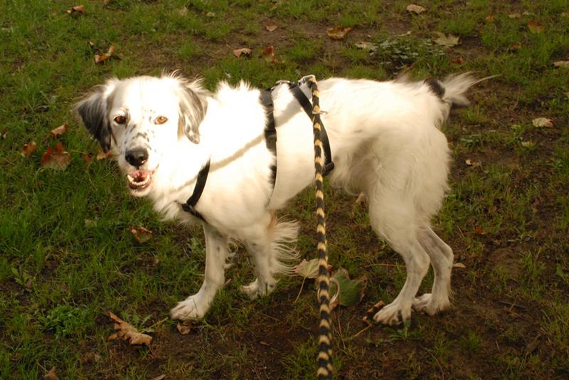 Bildertagebuch - Sissi, die Maus ist eine echte Schönheit und der perfekte Familienhund ... -- VERMITTELT -- 23556888rn