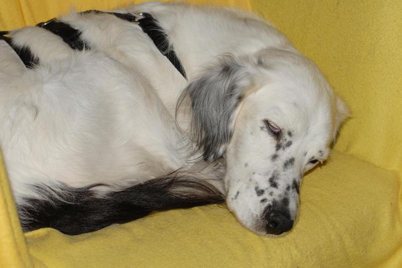 Bildertagebuch - Sissi, die Maus ist eine echte Schönheit und der perfekte Familienhund ... -- VERMITTELT -- 23556894ir