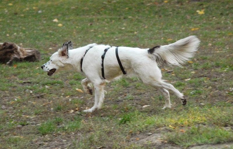 Bildertagebuch - Sissi, die Maus ist eine echte Schönheit und der perfekte Familienhund ... -- VERMITTELT -- 23556895ts