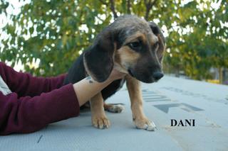 Dani hat ein neues Zuhause gefunden 23632563gk