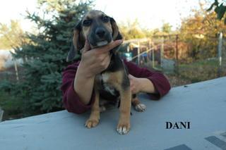 Dani hat ein neues Zuhause gefunden 23632564qh