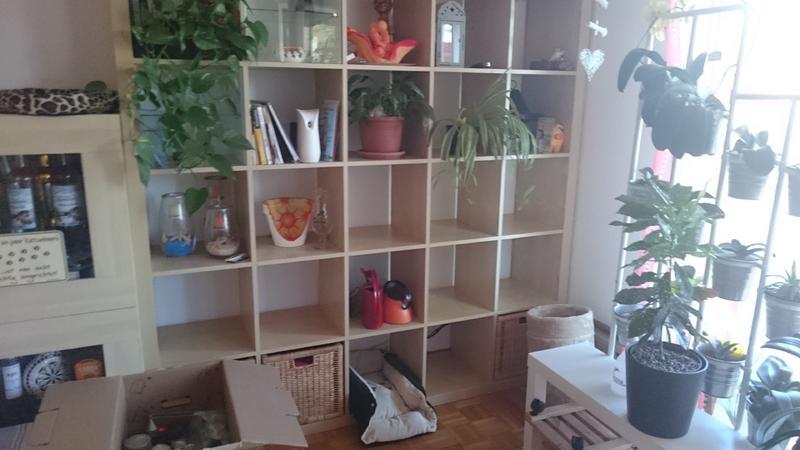 katzen forum was ist das f r eine pflanze giftig. Black Bedroom Furniture Sets. Home Design Ideas
