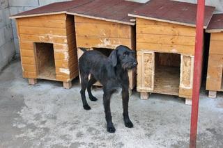 Emma und Olli haben ein neues Zuhause gefunden 23808696fw