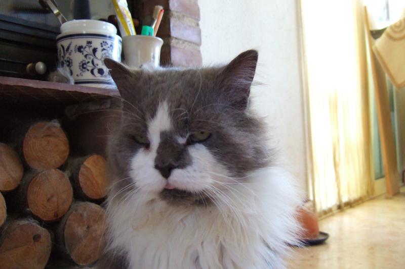 Katze Zunge Hängt Raus