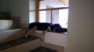 Lilly hat ein neues Zuhause gefunden 23927736xv