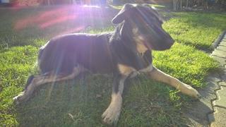 Lilly hat ein neues Zuhause gefunden 23927739wr