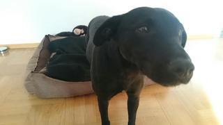 Molly hat ein neues Zuhause gefunden 23937776pp