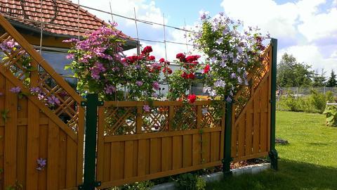 Klettergerüste Für Rosen : Übersicht rosen garten wissen