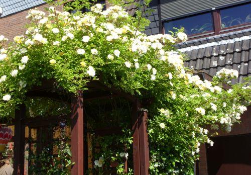 Klettergerüste Für Rosen : Klettergerüst rosen kletterrosen garten wissen