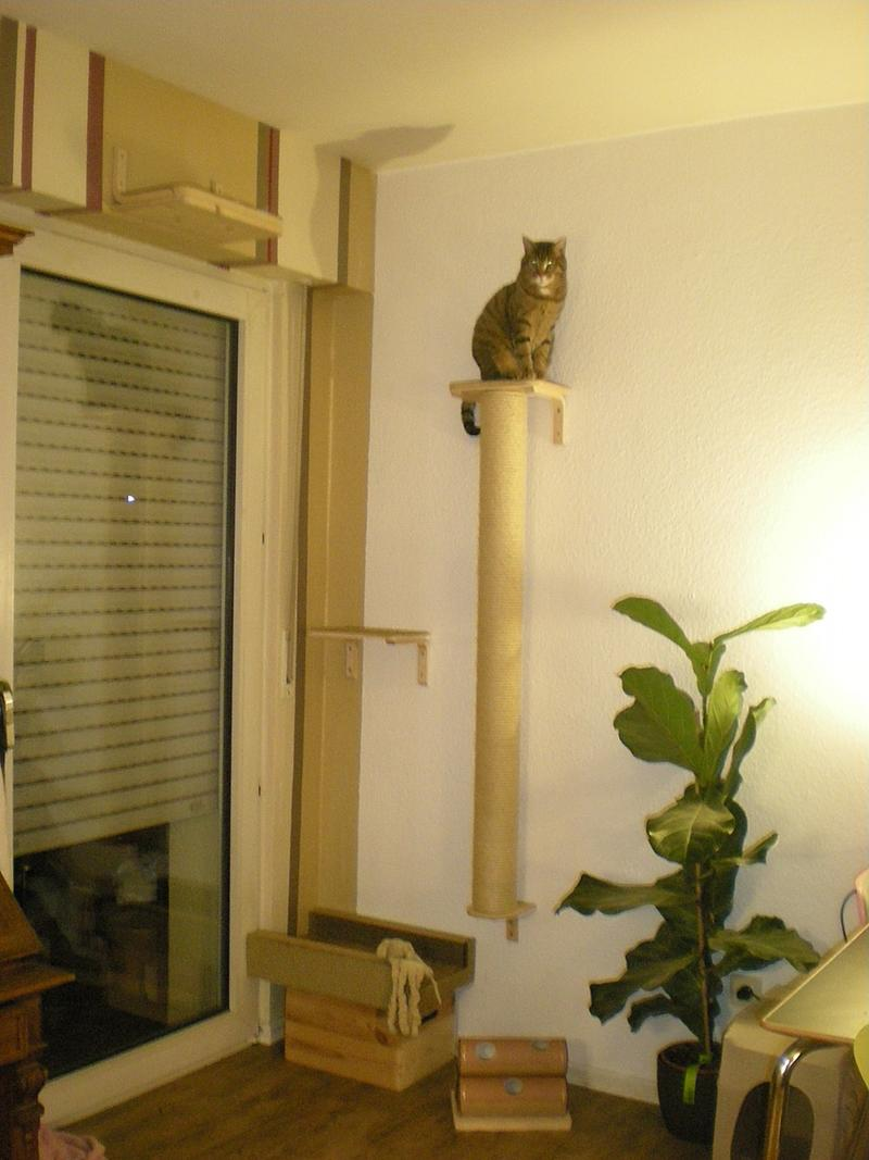 Catwalk Selber Bauen catwalks selber bauen fragen katzen forum