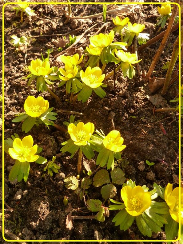 Gartentagebuch Im Januar 2016 Teil 1 Page 4 Mein Schoner