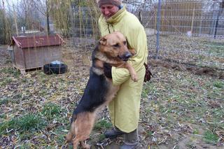 Yuli, Schäferhündin, geb. ca. März 2011 24317402fc