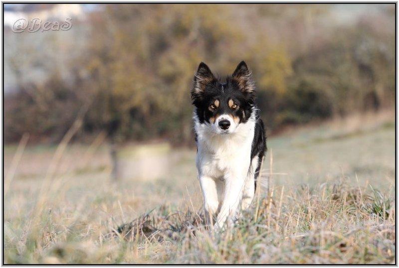 Zoophilie-FAQ, Die Liebe mit Tieren, Biologisches