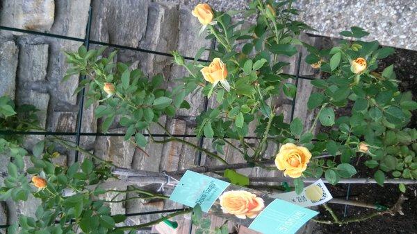 Eure gartenbilder beete und gestaltungsideen winter for Gartengestaltung 150 qm