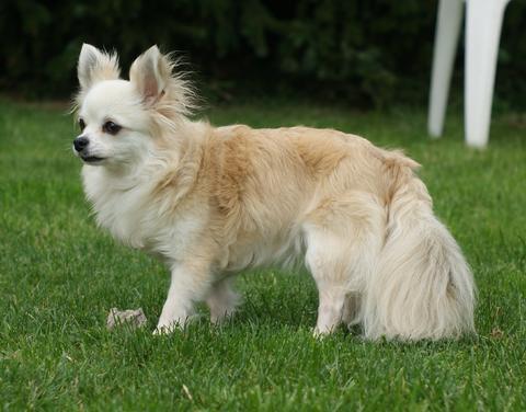 Wie groß sind Hunde Schwänze