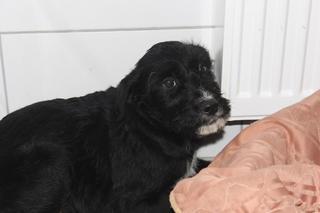 Zorro hat ein neues Zuhause gefunden 24377346vg
