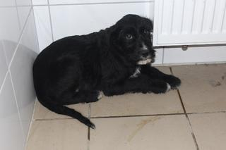 Zorro hat ein neues Zuhause gefunden 24377349cw