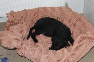 Zorro hat ein neues Zuhause gefunden 24377351tq