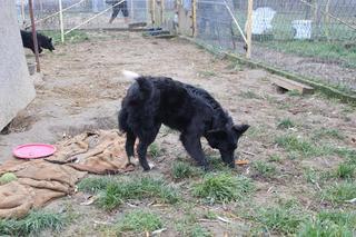 Panda, Mischlingshündin, geb. ca. April 2015 24377587ru