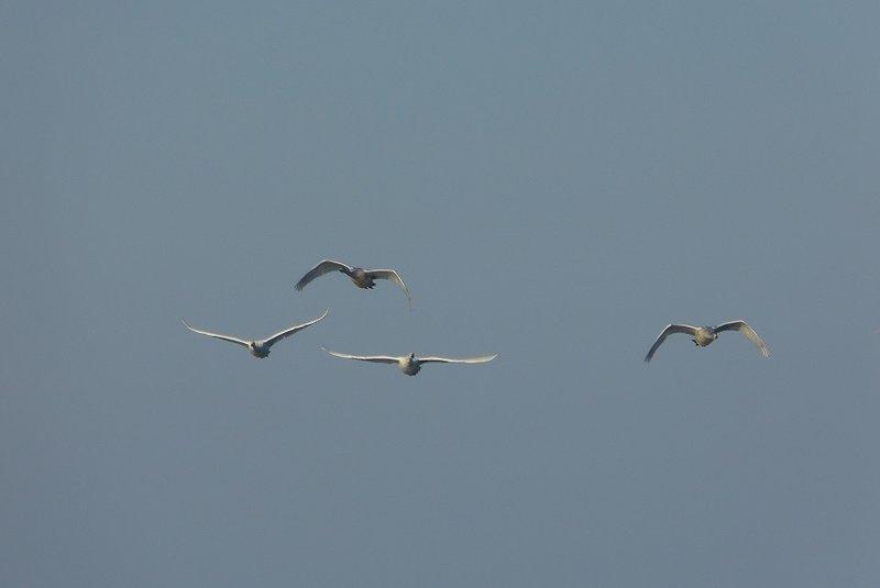 Vögel 24397204er