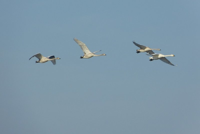 Vögel 24397213aq