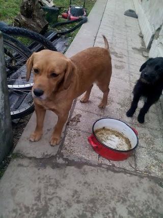 Zoe, Beaglemischlingshündin, geb. ca. Juni 2012 24470431fu