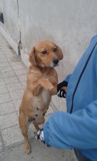 Zoe, Beaglemischlingshündin, geb. ca. Juni 2012 24470433ww