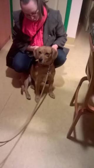 Zoe, Beaglemischlingshündin, geb. ca. Juni 2012 24580650ty