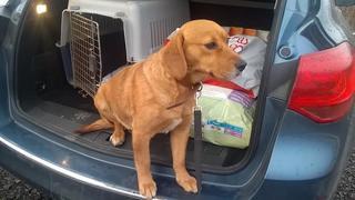 Zoe, Beaglemischlingshündin, geb. ca. Juni 2012 24580653cr
