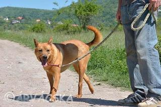 Buksi, Terriermischlingshündin, geb. ca. März 2013 24624694xs
