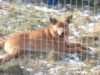 Buksi, Terriermischlingshündin, geb. ca. März 2013 24624698wl