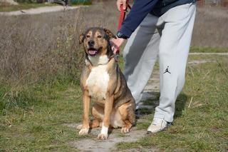 Max, Mischlingsrüde, geb. ca. 2006 24624895mc