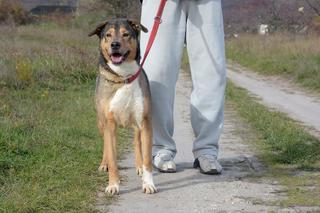 Max, Mischlingsrüde, geb. ca. 2006 24624898hw