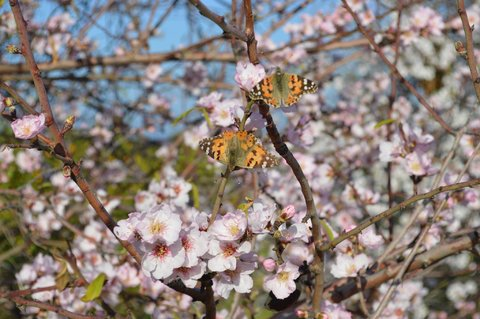 Garten quasseltanten im winter seite 64 for Fliegen in pflanzenerde