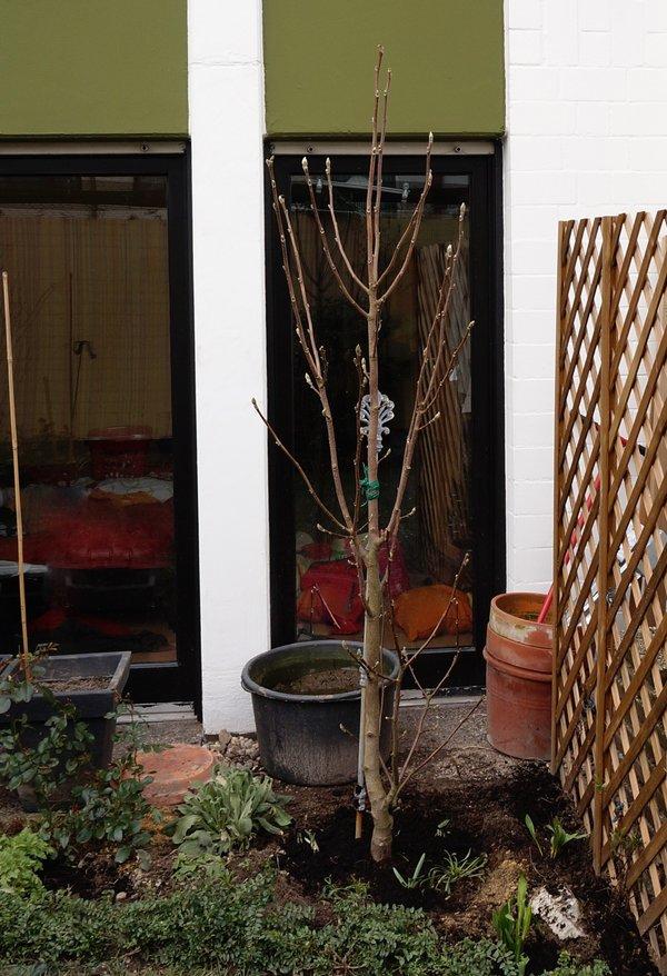 magnolie balkon cheap pin it with magnolie balkon. Black Bedroom Furniture Sets. Home Design Ideas