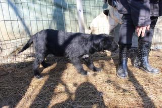 Zorro hat ein neues Zuhause gefunden 24788108mo