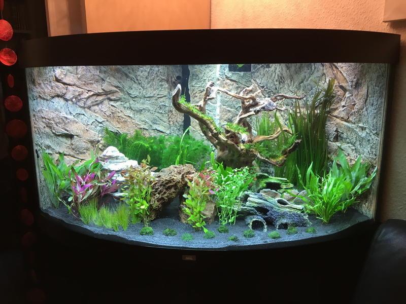 neueinsteiger stellt sein aquarium vor und braucht hilfe. Black Bedroom Furniture Sets. Home Design Ideas