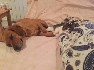 Zoe, Beaglemischlingshündin, geb. ca. Juni 2012 24810805gx
