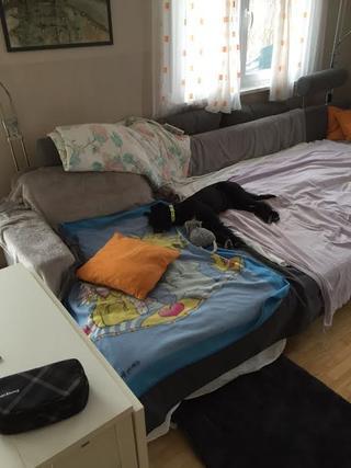 Zorro hat ein neues Zuhause gefunden 24810813wx