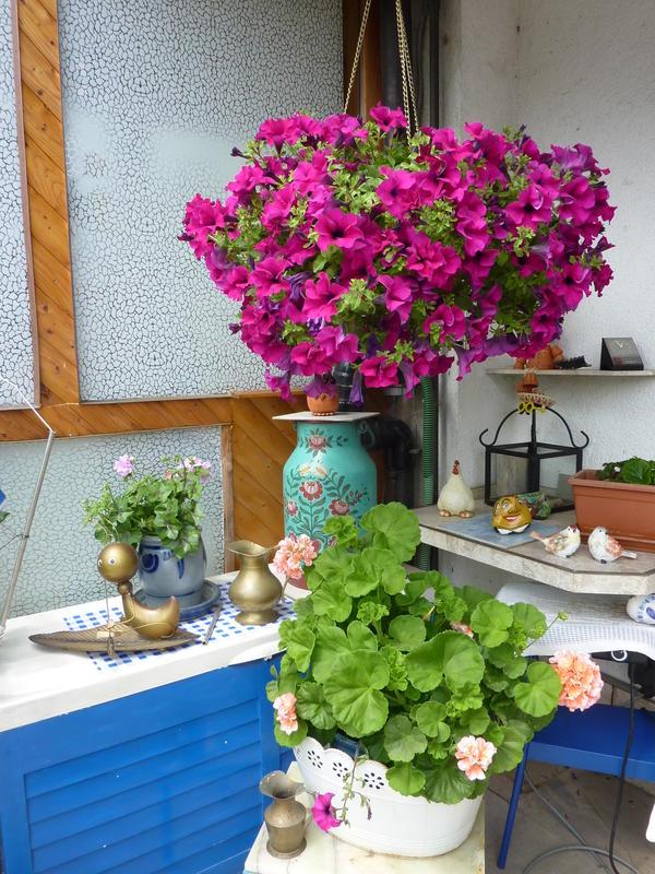 Bepflanzte zinkwanne seite 7 gartengestaltung mein for Gartengestaltung zinkwanne