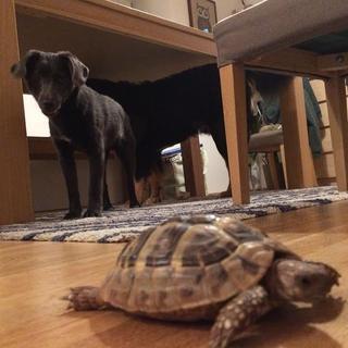 Bessie hat ein neues Zuhause gefunden 24896099ad